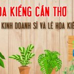 Hoa kiểng Cân Thơ: chuyên cung ứng cây cảnh văn phòng